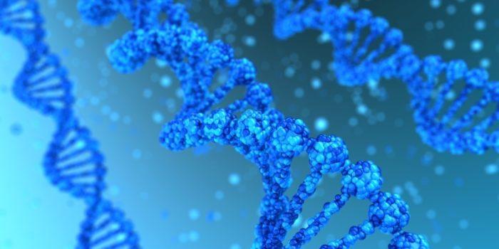 Mutacja genu MTHFR – prowadzi do rozwoju chorób cywilizacyjnych