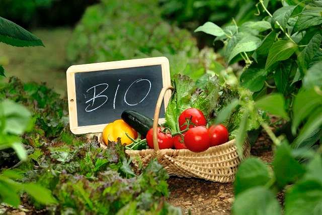 Żywność eko – czy rzeczywiście jest taka zdrowa